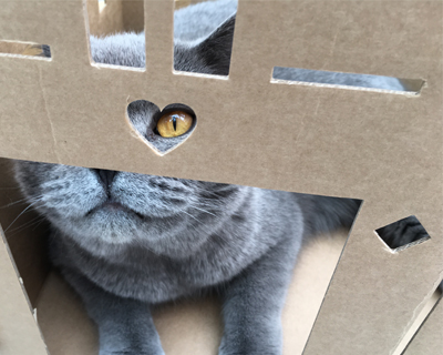 Why do cats love cardboard