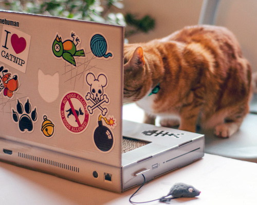 Cat Scratch Laptop crop